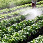 農薬が体へ与える影響について知る:MLMと健康